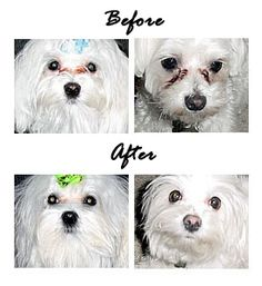 Eye Envy Pet Tear Stain Remover Non Refrigerated Formula | The Sassy Pup