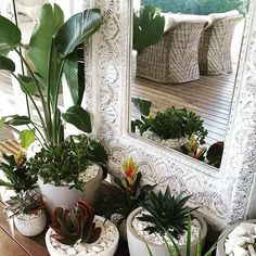 the grove byron bay - plants Holiday Inspiration, Indoor Plants, Decor, Home And Garden, Balinese Decor, Bali Decor, Home Decor, Plant Decor, Outdoor Design