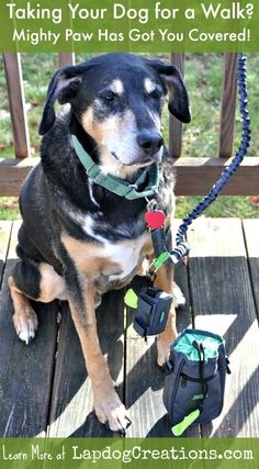 Taking Your Dog for a Walk? Mighty Paw has pet parents covered wtih high quality accessories! ©LapdogCreations #sponsored Dog Mom | Dog Walking | Giveaways | Dog Products