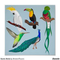 Shop Exotic Birds Poster created by ArtisticFlowers. Personalize it with photos & text or purchase as is! Tropical Birds, Exotic Birds, Photos Hd, Bird Poster, Bird Quilt, Vector Photo, African Safari, Custom Posters, Bird Feathers