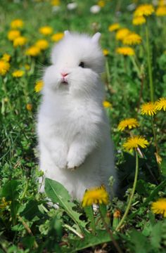 Bunny in a patch of dandelions...