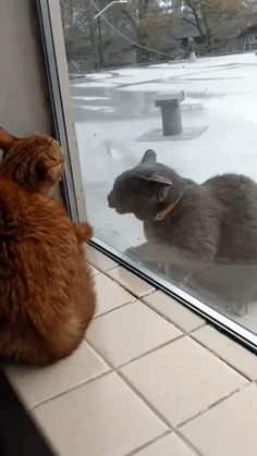 Let me in, it's very cold here