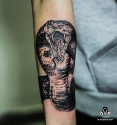 dg.haseon - cobra tattoo