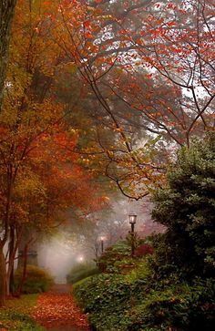 Autumn Mist - I love the lamps in the mist with the beautiful fall foliage. Fall Pictures, Pretty Pictures, Beautiful World, Beautiful Places, Simply Beautiful, Autumn Scenes, All Nature, Belle Photo, Beautiful Landscapes