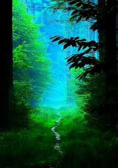 40 Fascinating Photographs Of Forest Paths To Another World - Bored Art Foto Nature, All Nature, Amazing Nature, Forest Path, Tree Forest, Magic Forest, Forest Light, Forest Scenery, Misty Forest