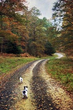 coffee-and-wood: English Forest Walk Mid Autumn.