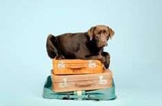 Pet Travel Specialists: What YOU need to know...http://www.clairmontanimalhospital.com/blog/pet-travel-specialists-need-know/