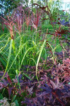 Ferner Osten, ook in schaduw, 3 per m Patio Garden, Plants, Garden Gadgets, Cottage Garden, Grasses Garden, Ornamental Grasses, Garden Inspiration, Planters, Trees To Plant