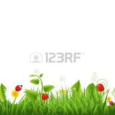 flower border: Grass Border With Ladybug And Leaf Illustration