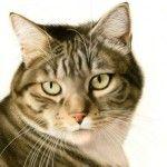 Tekeningen katten – Francien van Westering
