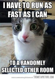 bahaha this reminds me of my old cat. She'd always take off running as if she were demon-possessed or something X)