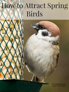 How to Attract Spring Birds - Having a yard full of songbirds is one of the highlights of spring. Here are some ways to attract spring birds to your yard.