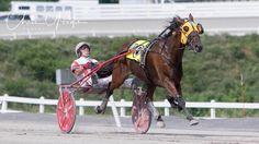 Dave Palone 18,000 wins 7-12-17 Harness Racing, Thoroughbred, Horses, Animals, Animales, Animaux, Animal, Animais, Horse