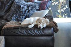 Comfortable Dog!