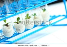 Plant science culture - stock photo