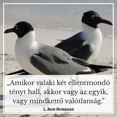 Idézetek az életről - Vajon tényleg lehetséges, hogy olyanná alakítsuk az életünket, amilyenné szeretnénk? - Olvasd el a teljes cikket Penguins, Penguin