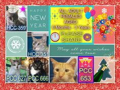 These cats desperately need a save by 12:30pm Wed 31/12/14. If you are a rescue or know a rescue that can help, please contact Hawkesbury Pound, NSW