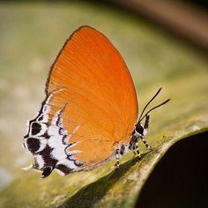 mylifeisbrilliant.com  most-beautiful-butterflies...