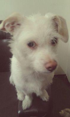 """My cute little dog """"Tita"""""""