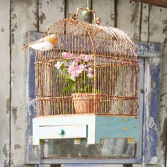 old bird cage Vintage Birds, Shabby Vintage, Vintage Decor, Shabby Chic, The Caged Bird Sings, Bird Cages, Bird Feathers, Beautiful Birds, Bird Houses