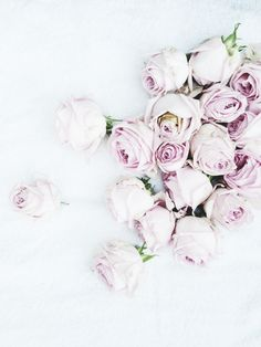 lilac colored roses