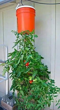1000 images about 5 gallon bucket on pinterest 5 gallon - Self watering 5 gallon bucket garden ...