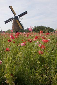 Summer Windmill - Zeeland, Netherlands