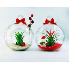 2 Holiday Air Plant Terrariums With Flat Bottom Hand Blown Christmas... (€21) ❤ liked on Polyvore featuring home, home decor, home & living, home décor, ornaments & accents, silver, mini globe, miniature terrarium, red home decor and miniature globe