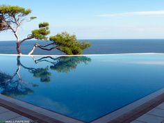awesome swimming pool overlooking the Pacific ocean, with a Lone Cypress