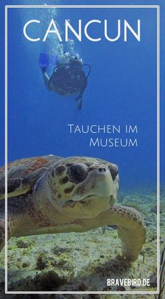 Cancun - Mexiko: Tauchen zwischen 450 Statuen im MUSA Unterwassermuseum #Tauchen #Mexiko #Reisen