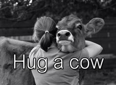 Hug a Cow :) itl b a good day then!
