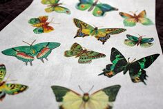 Butterfly Wafer Paper
