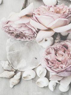 vintagepiken   Line Kay   The rose. She is the poem.