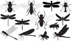 Vector collection of flies, dragon fly, bees etc. #silhouette #dragonfly