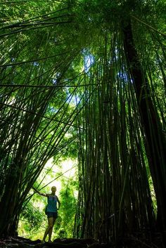 Bamboo temple Image by theqspeaks Bamboo forest on the Pipiwai Trail in the Kipahulu Area of Haleakala National Park on the eastern side of Maui. Places Around The World, Around The Worlds, Hawaiian Islands, Interior Exterior, Wonders Of The World, Amazing Photography, Places To See, The Good Place, Beautiful Places