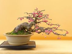 Image result for bonsai group planting #bonsaitrees