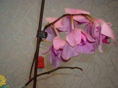 Ezzel az oldattal öntözd a szobanövényeidet, és pár nap múlva teljesen újjászületnek!