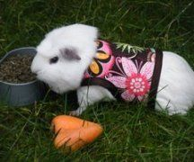 I said a long time ago I want a guinea pig cause I wan't to dress it see you can is that not cute?