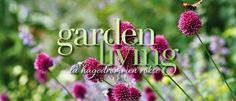 Druehøsten blir til druegele Garden Living, Dandelion, Planters, Flowers, Outdoors, Om, February, Dandelions, Plant