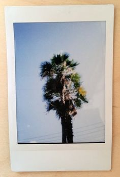 Tropical summer vibes #instax