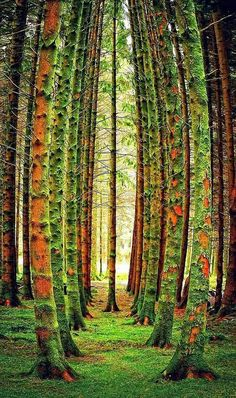 BEAUTIFUL & LOVELY TREES