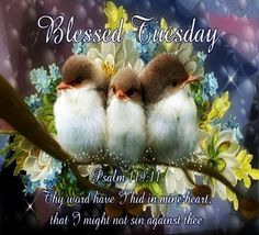 Have a blessed Tuesday! Tuesday Quotes Good Morning, Happy Tuesday Quotes, Good Morning Happy, Good Morning Picture, Morning Pictures, Monday Blessings, Morning Blessings, Tuesday Images, Psalm 119 11