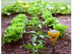 Global Internet Garden Sales Market @ http://www.orbisresearch.com/reports/index/global-internet-garden-sales-market-2016-industry-trend-and-forecast-2021 .