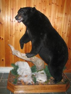 full body bear mount - Google Search