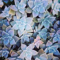 #succulents @ lovelyclusters on Instagram http://instagram.com/p/ff3CKGBiXa/