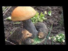 Посмотрите 35 идей украшения сада своими руками - YouTube