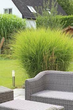 Terrassen: moderner Garten von grasgrau - GARTENDESIGN
