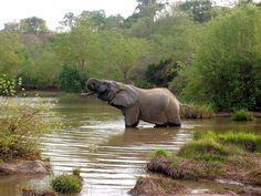 Mole National Park, Ghana. I want to see an elephant in Ghana!