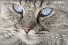Gif Blogu 'dan ücretsiz indirebilirsiniz... ücretsiz gif indir, gif blogu, gif indir, hareketli resim indir, hayvan gif, hayvanlar gif, sevimli dostlar gif, sevimli dostlar hareketli resim