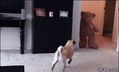 GIF Scared Pug